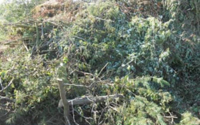 Grüner Strauchschnitt